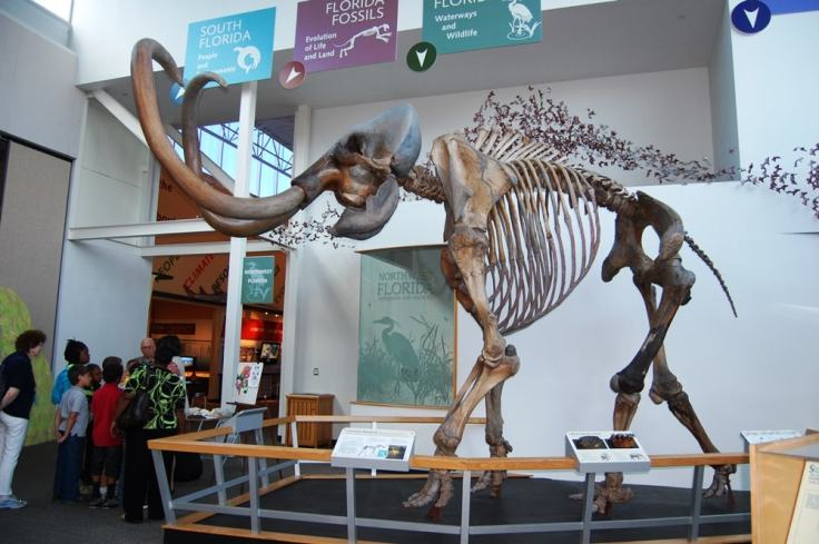 museum-natural-history-min